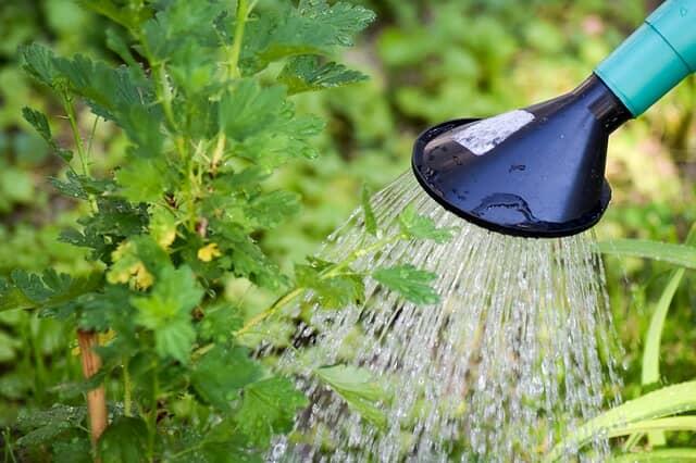 l'orario migliore per innaffiare le piante